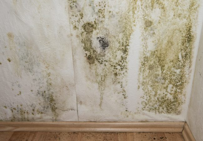 Mold and Mildew Growth In Your RV