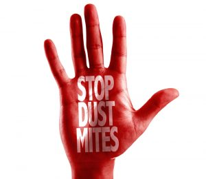 dust mites on mattress