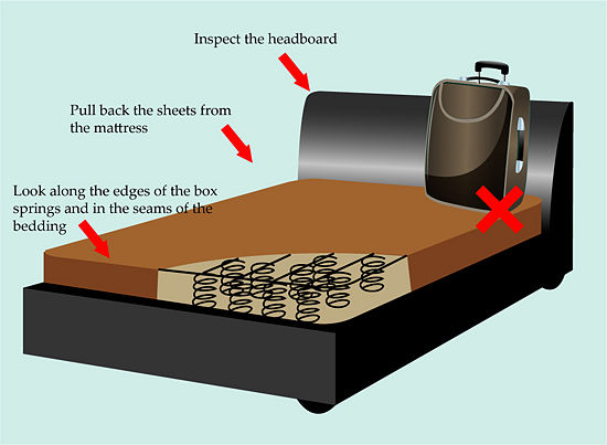 Heaters To Get Rid Of Bed Bugs