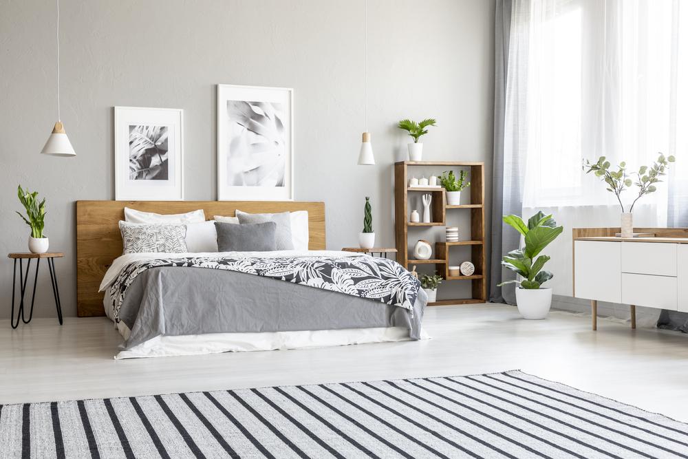 Plants that help you sleep