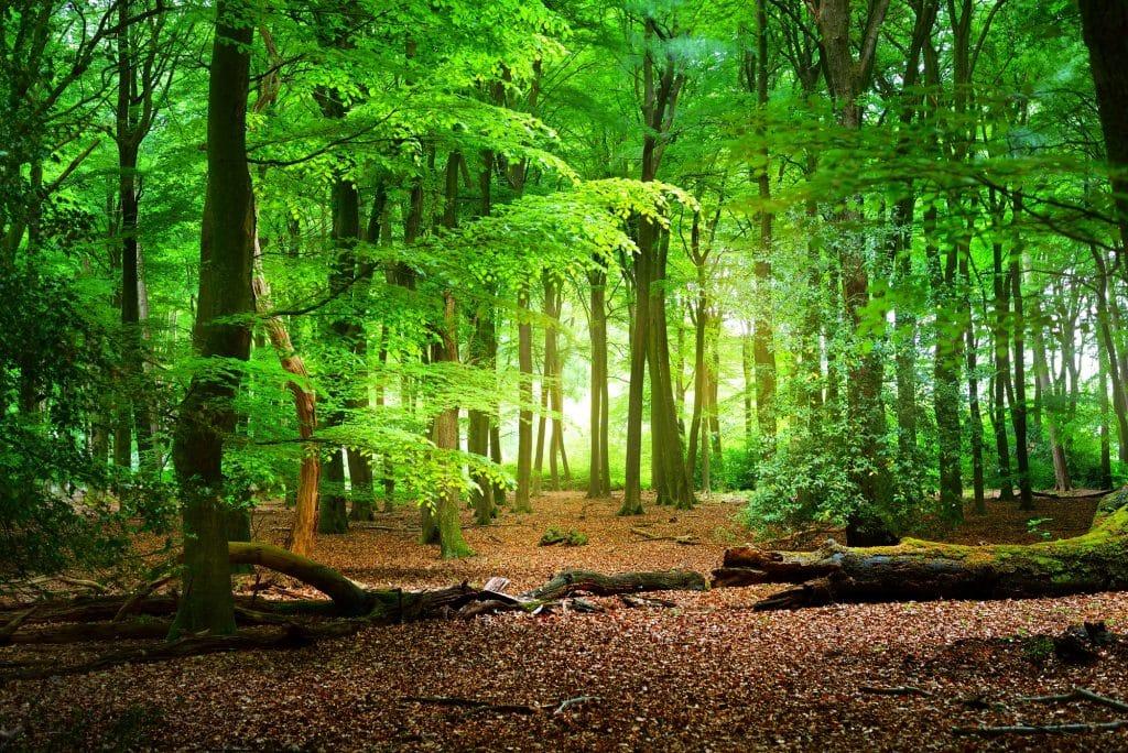 Spring Forest Image